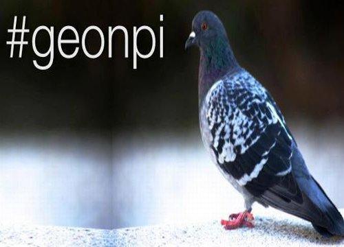 pigeons - mouvement de défense des entrepreneurs français