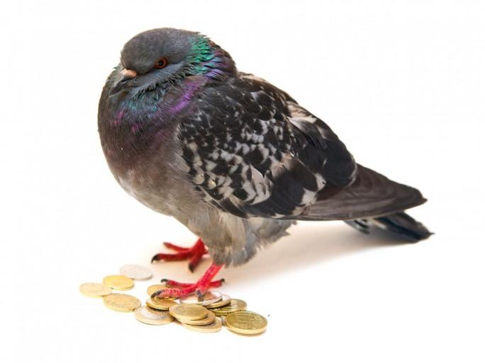 pigeons-entrepreneurs-français-taxation-fiscalité