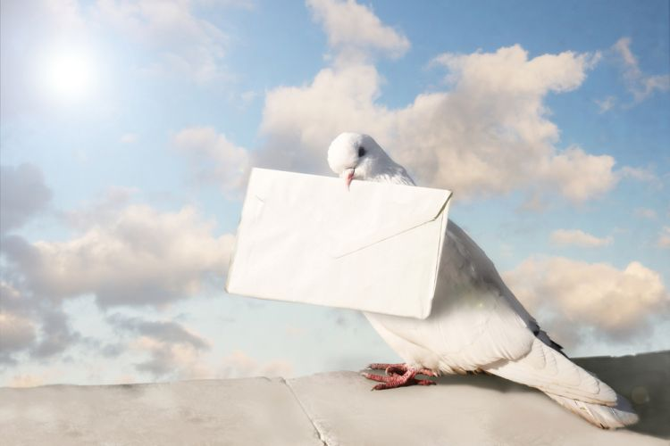 pigeons-fiscalite-manifeste-start-up-PME