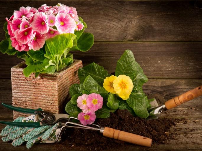 plantes et jardins.com gamm vert