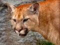 mac-os-x-mountain-lion-10-8-5