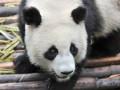 google-panda-algorithme