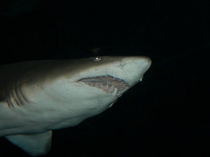 google-requins-attaques-cables-fibre-ocean
