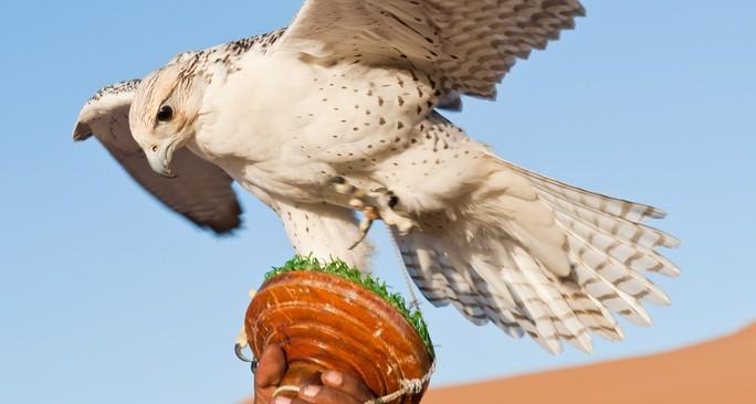 desert-falcons-kaspersky