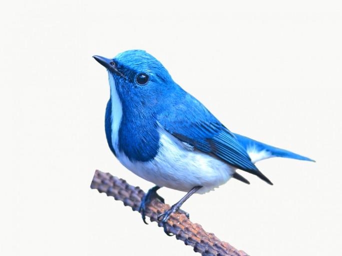 twitter-blue room